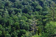 Ostry wizerunek Adirondack krajobraz zdjęcia royalty free