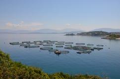 ostrygą jest rolni rybacy utrzymującym sprzedającym Obraz Royalty Free