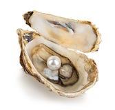 Ostryga z perłami odizolowywać na bielu fotografia royalty free