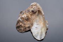 Ostrygowe morze skorupy Zdjęcie Royalty Free