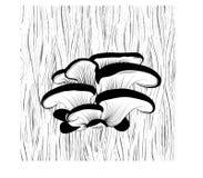 Ostrygowe pieczarki na drzewie Zdjęcie Royalty Free