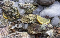 Ostrygowe skorupy z lodem i cytryną na kontuarze łowią sklep Ostrygi dla sprzeda?y przy owoce morza rynkiem zdjęcia royalty free