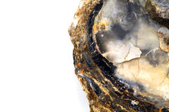 Ostrygowej skorupy skamielina, szczegół, biały tło Obrazy Royalty Free