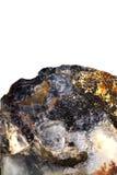 Ostrygowej skorupy skamielina, szczegół, biały tło Fotografia Royalty Free