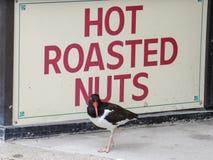 Ostrygowy łapacz Pozuje Gorącą Piec dokrętką Podpisuje wewnątrz Atlantyckiego miasto, Nowego - bydło Zdjęcie Royalty Free