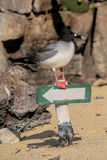 Ostrygowy łapacz na znaku Zdjęcie Stock