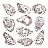 Ostrygowy denny shellfish nakreślenie, ołówkowego rysunku set fotografia stock
