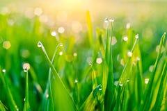 ostrza dew trawy Zdjęcia Stock
