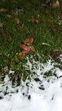 Ostrza śnieg Obraz Royalty Free