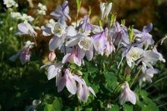 ostrza tła piękna ogród kwiatów Obrazy Royalty Free