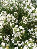 ostrza tła piękna ogród kwiatów fotografia royalty free