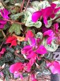 ostrza tła piękna ogród kwiatów Zdjęcie Stock