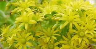 ostrza tła piękna ogród kwiatów Obrazy Stock