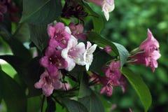 ostrza tła piękna ogród kwiatów zdjęcie royalty free