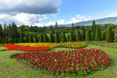ostrza tła piękna ogród kwiatów Fotografia Stock