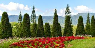ostrza tła piękna ogród kwiatów Obraz Stock