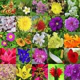 ostrza tła piękna ogród kwiatów Obraz Royalty Free