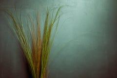 Ostrza trawa Obrazy Stock