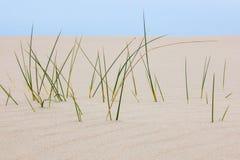 Ostrza trawa w piasku Fotografia Stock