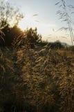 Ostrza trawa z backlight położenia słońce Zdjęcia Stock