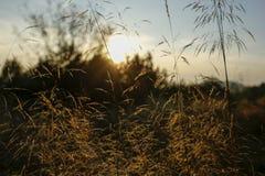 Ostrza trawa z backlight położenia słońce Fotografia Royalty Free