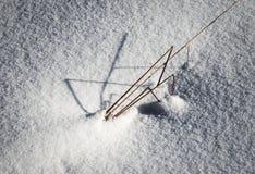 Ostrza trawy klejenie z śniegu Obraz Royalty Free