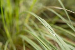 Ostrza trawy kwitnienie w wio?nie w hiszpa?szczyzny polu zdjęcie royalty free