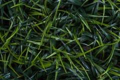Ostrza trawy tło Zdjęcia Royalty Free