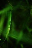 Ostrza trawy zakończenie Zdjęcia Stock