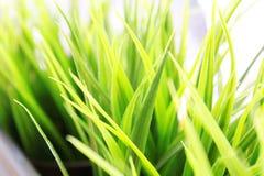 Ostrza trawy zbliżenie Obraz Stock