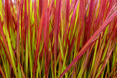 ostrze kolorowa roślinnych fotografia stock