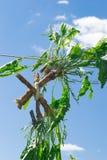 Ostrze korzeń na tle niebo Zdjęcia Royalty Free