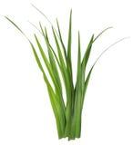 ostrze odizolowywający na bielu trawa zdjęcie stock