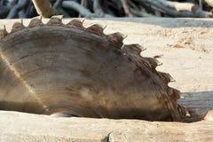 ostrze okólniki blisko piły się Kurenda Zobaczył na drewnianym tle z światłem dziennym obrazy royalty free