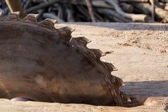 ostrze okólniki blisko piły się Kurenda Zobaczył na drewnianym tle z światłem dziennym zdjęcia royalty free