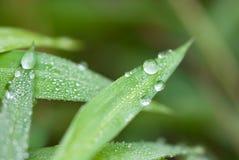 ostrze zrzutu trawy wody Obrazy Royalty Free