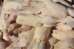Ostrzyżone Surowe kaczki Zdjęcia Stock