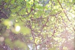 Ostrzy ciernie na roślinie fotografia royalty free
