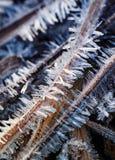 Ostrzy i błyszczący kolce lód zakrywali trawy w ranku mea Zdjęcia Stock