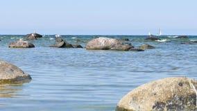 Ostsee nahe Visby, Gotland Setzen Sie mit Seemöwen auf Felsen und blauem Himmel auf den Strand stock footage