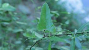 ostudzić roślin obrazy stock