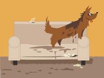 Ostyrig hund Royaltyfri Foto