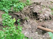 Osunięcie się ziemi i spadać drzewo Zdjęcie Stock