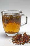 Oswego tea Royalty Free Stock Photography