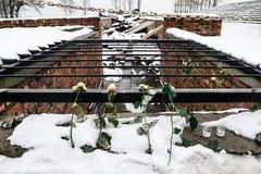 Oswiecim/Польша - 02 15 2018: Розовые цветки кладя na górze руин газовой камеры Стоковое Изображение