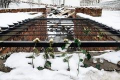 Oswiecim/Polen - 02 15 2018: Nam bloemen leggend bovenop de gaskamerruïnes toe stock afbeelding