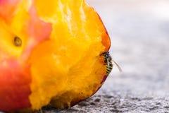 Osy łasowania brzoskwinia Fotografia Stock