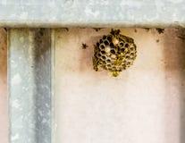 Osy gniazdeczko obraz stock