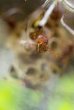 Osy gniazdeczko Zdjęcie Royalty Free