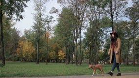 Oszałamiająco kobieta z szczeniaka odprowadzeniem w jesień parku zbiory